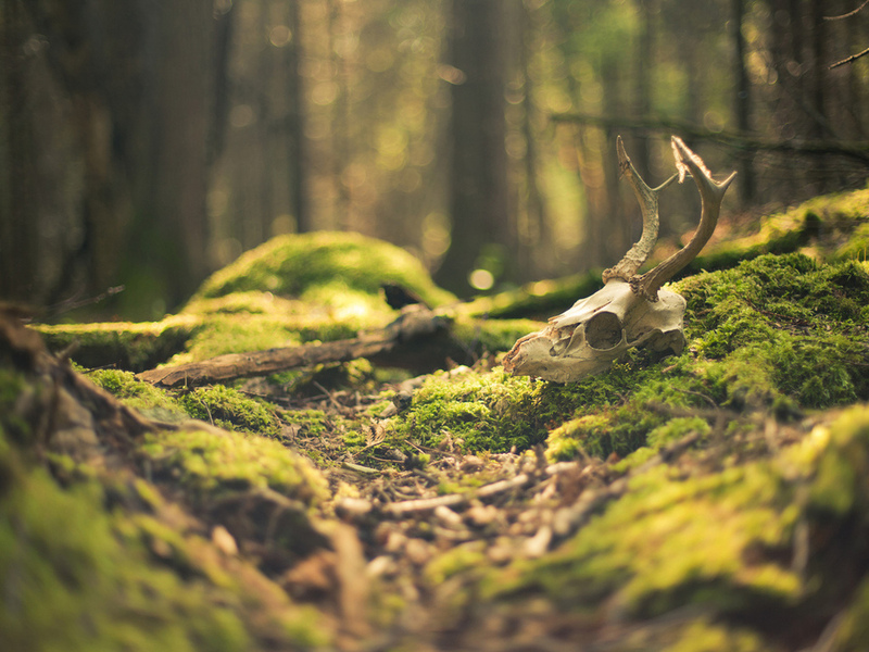 Тот случай, после которого мужчина перестал ходить в лес — стоит прочитать!