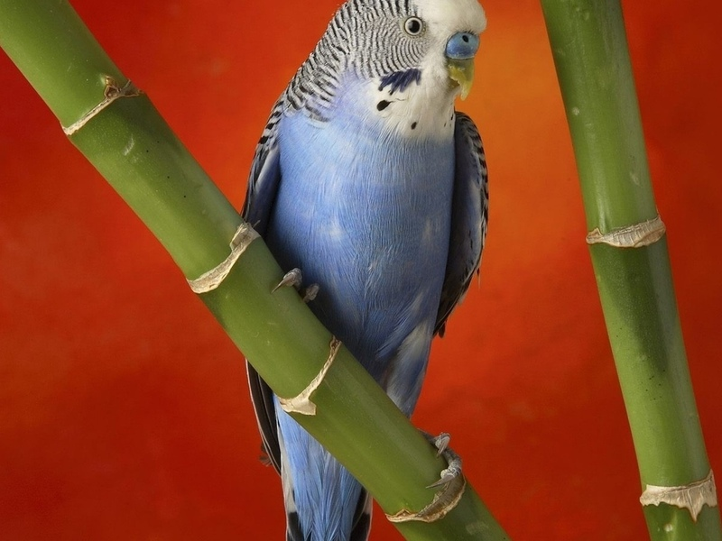 Мужику подарили ругающегося матом попугая. Ту ситуацию, которая произошла после этого — стоит прочитать!