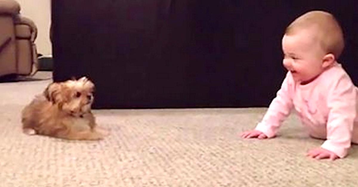 Папа снимает на камеру, как его ребенок разговаривает с собакой. Это очень мило!