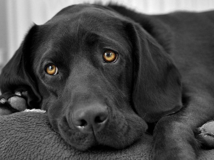 Мужчина не жалел никаких денег для своего верного пса