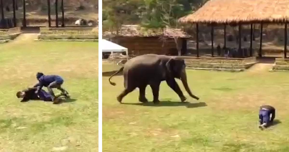 Человек нападает на смотрителя в заповеднике слонов. Теперь смотрите, как слон придет ему на помощь!