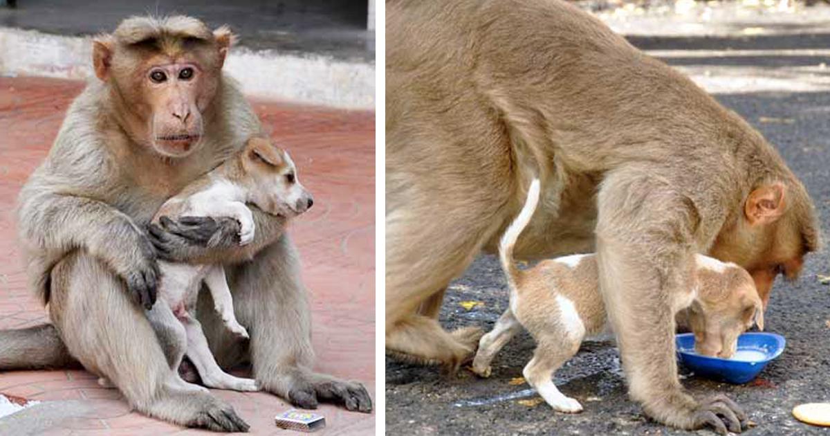 Обезьяна находит брошенного щенка, и принимает его как своего детеныша. Она защищает его от других бездомных собак и заботится о нем как родная мать!
