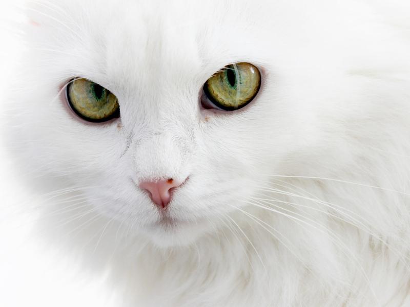 Отец думал, что кот не голоден. То, что произошло дальше — стоит прочитать.