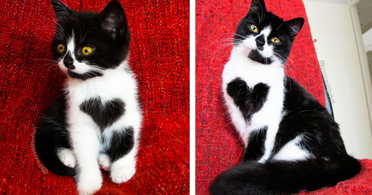 Встречайте Зои — очаровательную кошку, которая буквально носит свое сердце на груди!