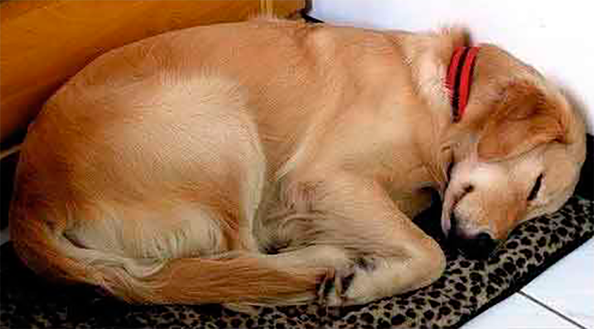 Женщина никогда не ожидала найти такую записку на ошейники собаки, которая посещала ее ежедневно. Это бесценно!