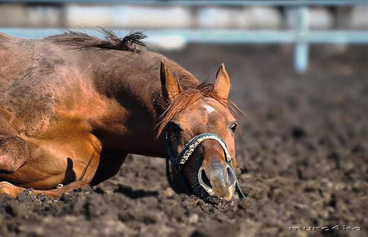 Владелец скаковой лошади становится нетерпеливым со своим животным, но ее реакция – неожиданно!