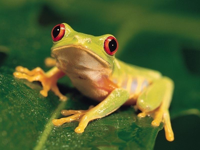Грустная история про лягушку…