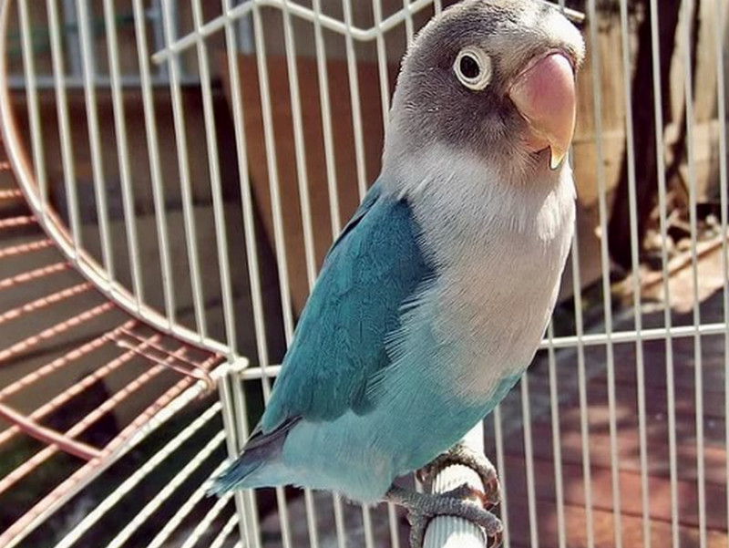 Таможенник не разрешал провезти попугая. Только послушай, что он предложил…
