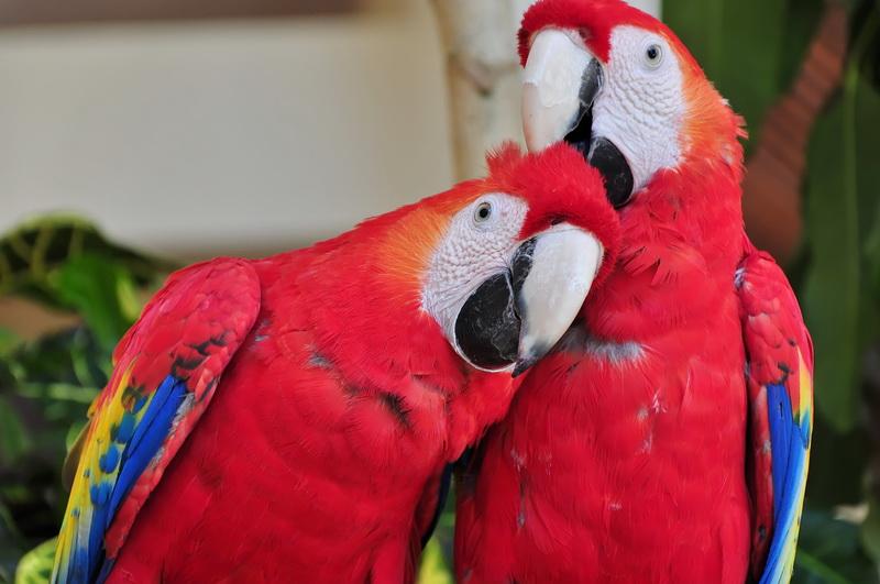 Женщина пыталась исправить речь своих попугаев, но никогда не ожидала такого результата!