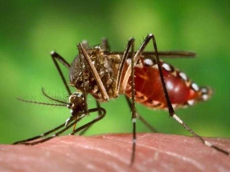 Теща пожаловалась зятю на комаров. То, что он ей ответил — это НЕЧТО!