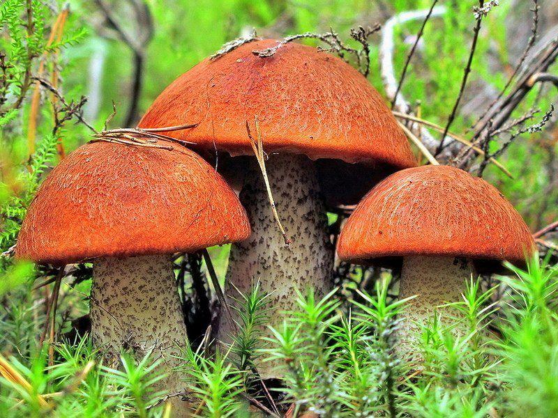 Вот как грибы, оказывается, зрение повышают!