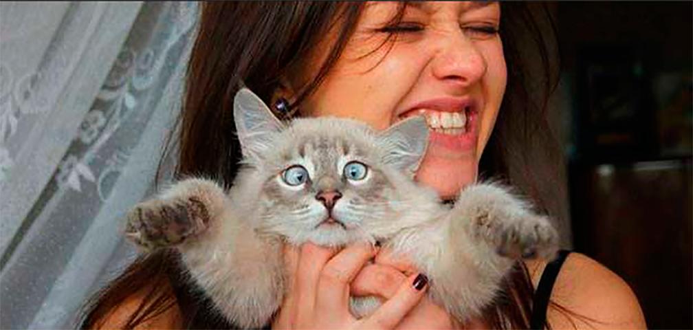 Дневник собаки — дневник кота. Это потрясающе!