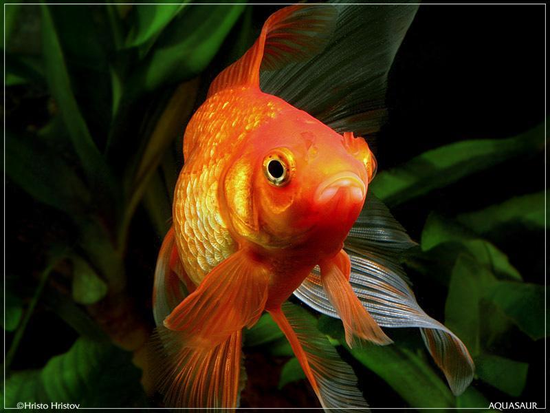Мужик поймал золотую рыбку и сделал ей неожиданное предложение!