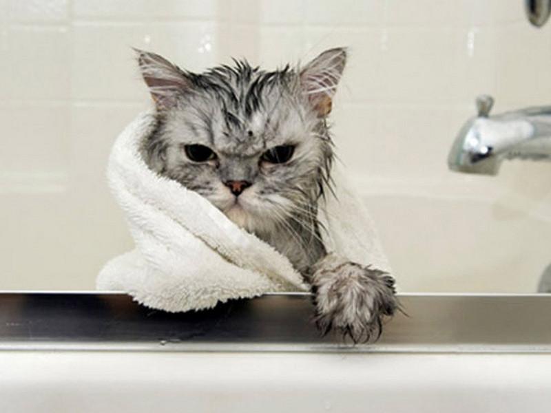В этой семье решили помыть кота. Но, решили они это сделать по очереди…