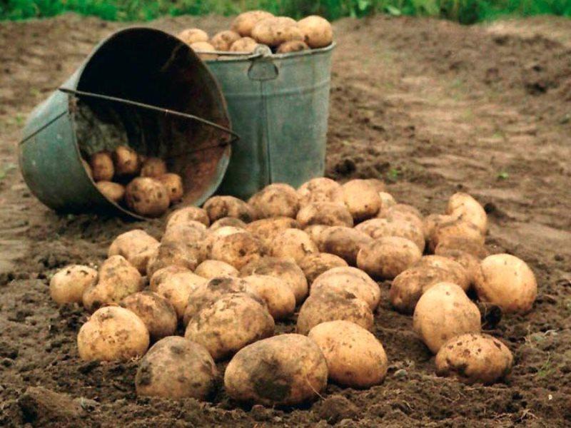 То, как этот парень пригласил всех копать картошку стоит прочесть!