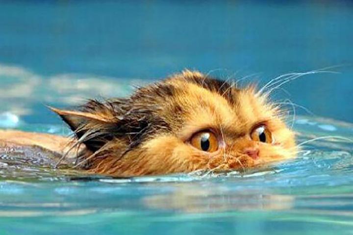 Как купать свою кошку, не получив увечья при этом. Это золото!