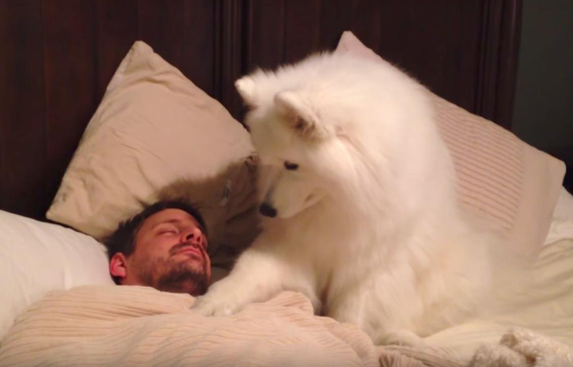 Собака наблюдает, как спит ее хозяин. Как она его будит, это самое сладкое зрелище, которое я когда-либо видела!