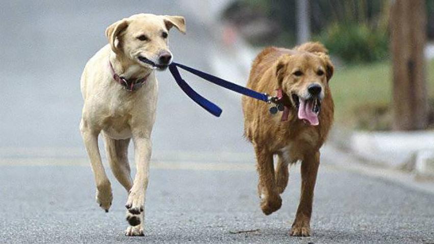 Их пес пропал на несколько дней. Но они даже не догадывались, что с ним произошло, пока не нашли его!