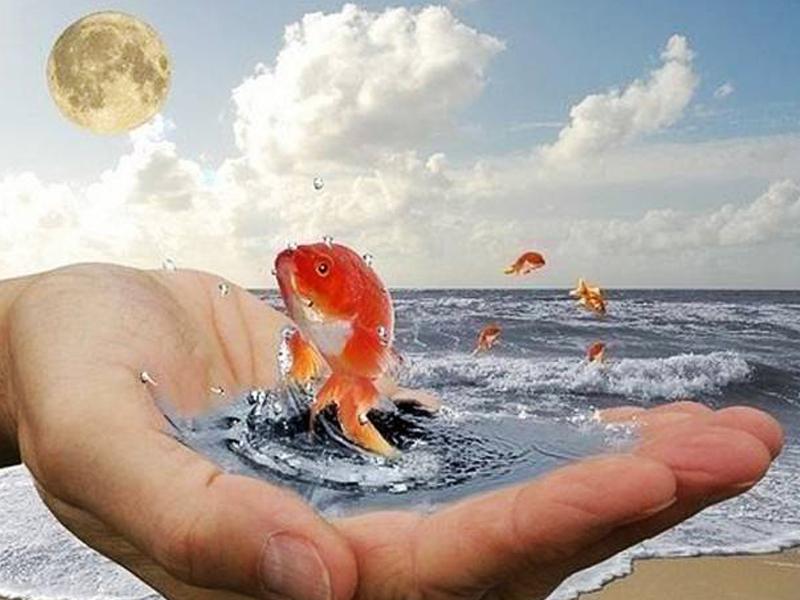 Матрос поймал золотую рыбку и загадал ей очень необычное желание! Улыбнись!
