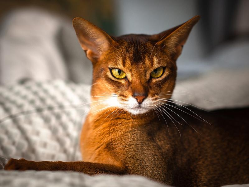 Его кошка не хотела есть никакую еду. Ветеринар поставил диагноз, который точно заставит тебя улыбнуться!