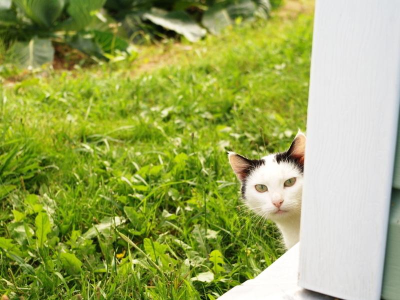 Тихую кошку привезли на дачу. Не поверишь, что с ней случилось на свободе!