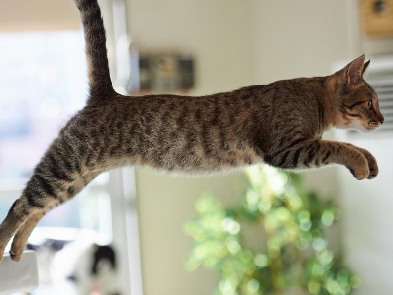 Девушка мыла окно, когда ее кот решил попробовать научиться летать! Итог истории тебя удивит!