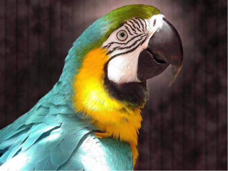 Попугай-алкоголик это что-то новенькое!