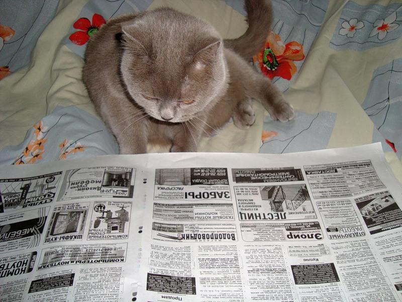 Жена приучила котика ходить в туалет на газетку. Но, муж не очень этим доволен, узнай почему!