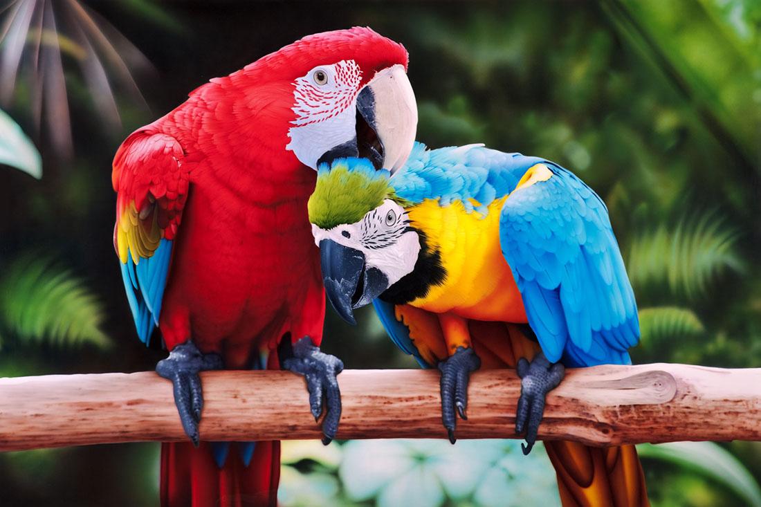Женщина пыталась переучить своих попугаев, но никогда не ожидала такого результата!