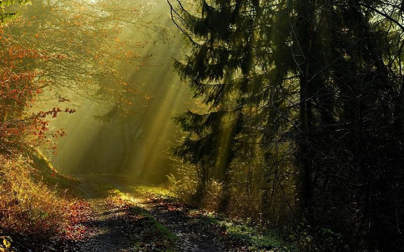 Атеист гулял по лесу. Но он никогда не ожидал, что с ним произойдет через мгновение!