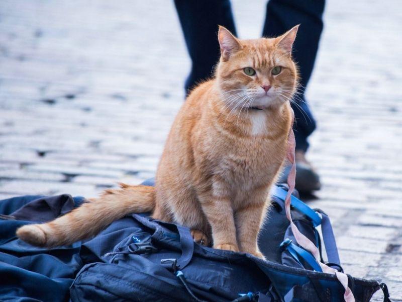 Уличный кот каждый день приносил на крыльцо жителям мертвую мышь, чтобы ему давали еды.Никто и представить не мог, что он додумается до такого…