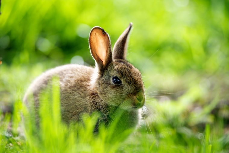 Слепые лесные животные, которые нуждались в помощи, помогли друг другу, но заявление кролика – шок!