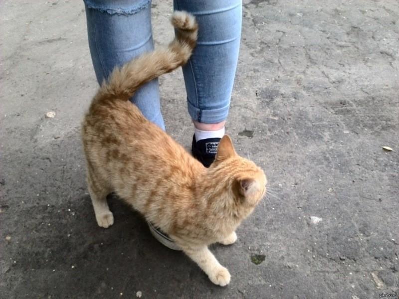 Почему коты бросаются под ноги? Секрет раскрыт!