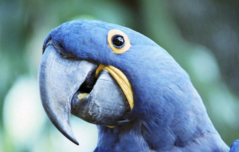 Единственными выжившими после кораблекрушения оказались мужчина и попугай. Что дальше сказала птица – уморительно!