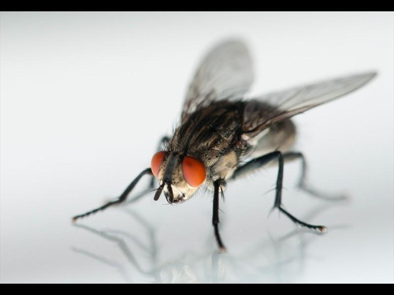 Три мухи решили поделиться жизненным опытом…