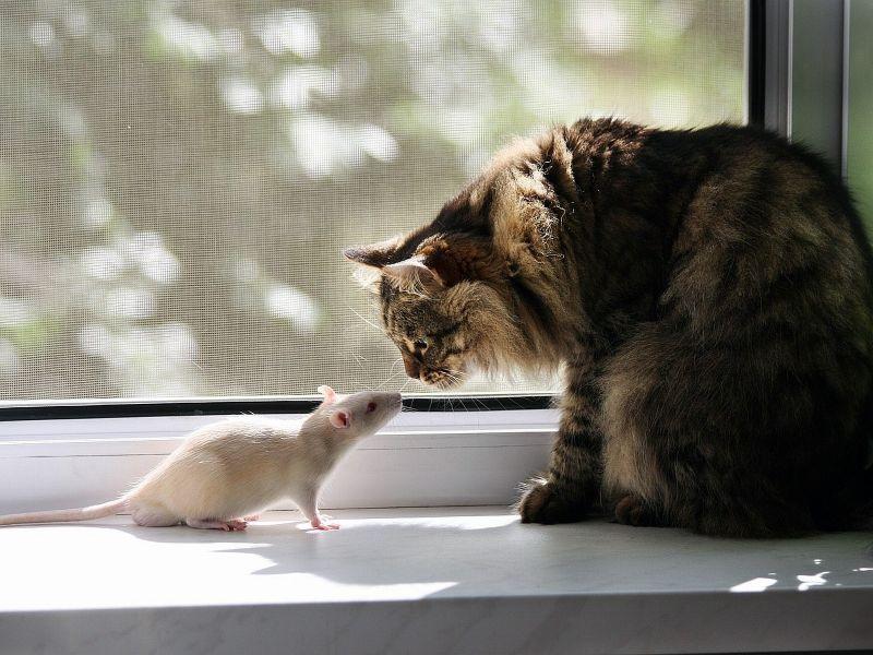 Решил парень проверить, как его кот ловит мышей. Закрыл вместе с мышью в бочке. Утром…