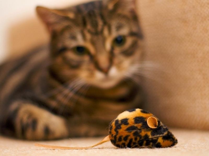 Девушка купила своему коту игрушечную мышь. Она и не подозревала, во что это все выльется!