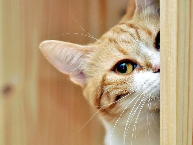 Один из котов украл колбасу. Только посмотри, что придумал этот хитрец!