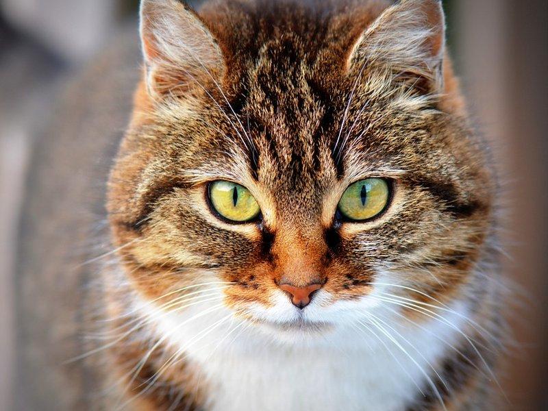У котиков свои причуды! :)