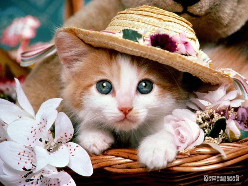 Коты не перестают удивлять!