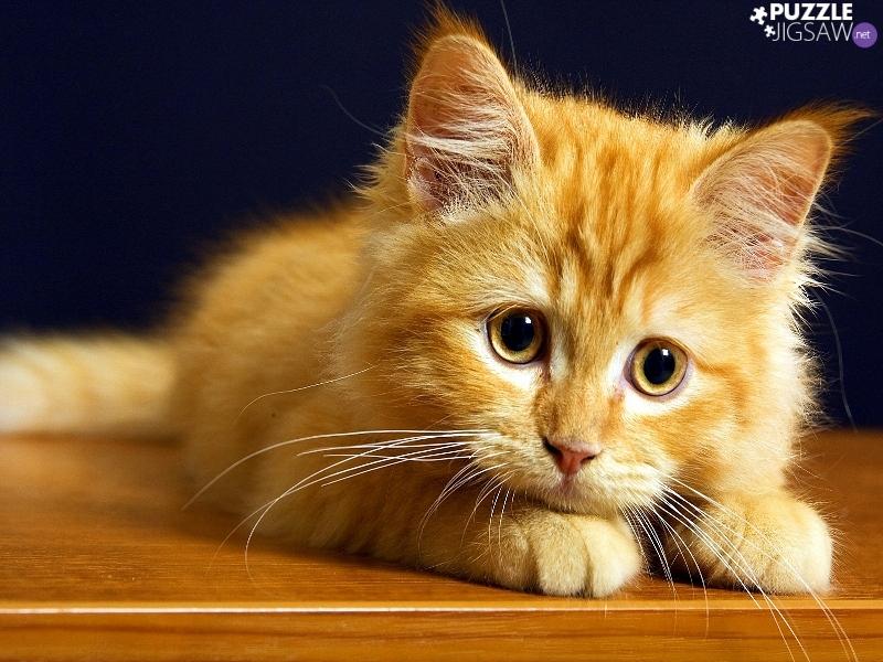 А говорят, что коты глупые!