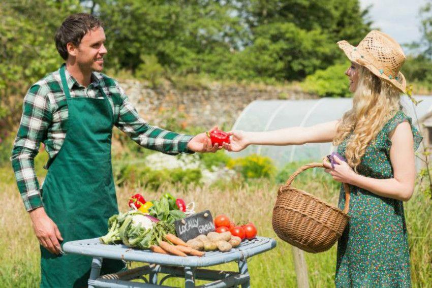 Женщина просит совет у своего соседа, как лучше выращивать помидоры. Но шокирована, когда произошло это!