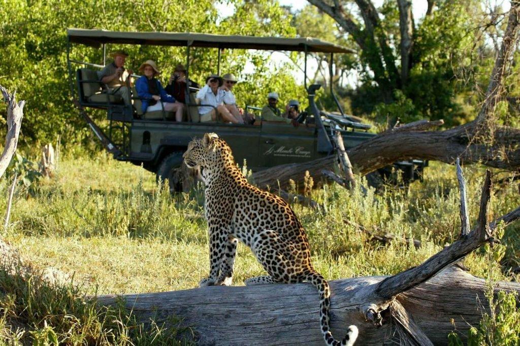 Богатая старая леди отправилась на фото-сафари в Африку с ее пуделем. Это было настоящее приключение!