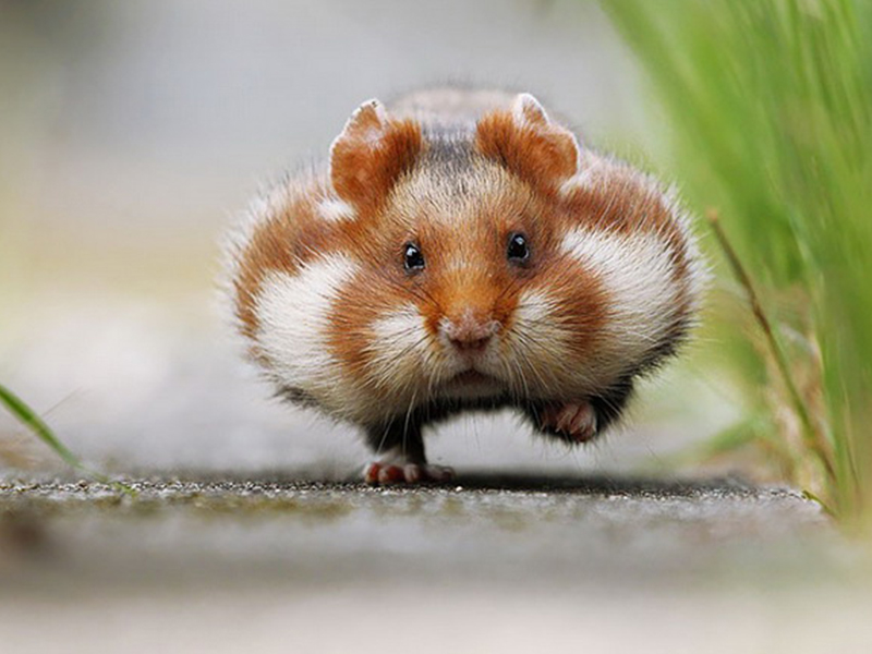 Хомяки — забавные животные!