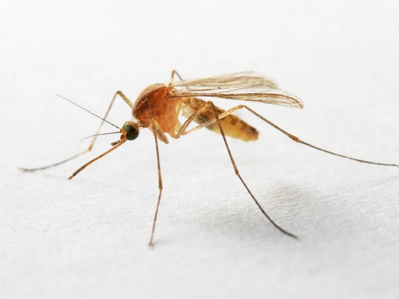 Комары — они такие!