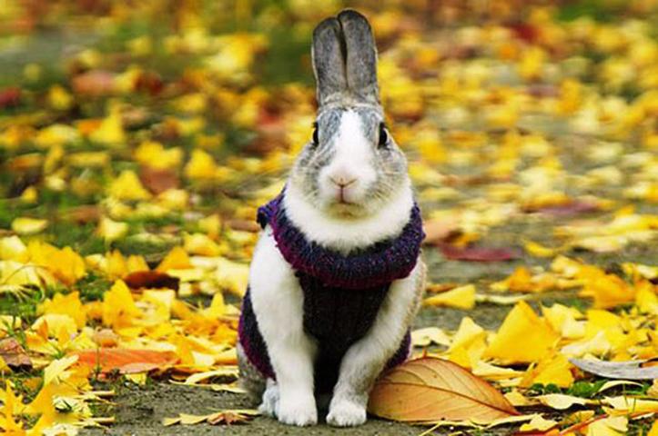 Слепые лесные животные, нуждающиеся в помощи, помогают друг другу, но заявление кролика – шок!