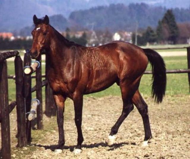 Владелец гоночной лошади теряет терпение из-за лени своего животного, но реакция скакуна на его угрозы – неожиданная!