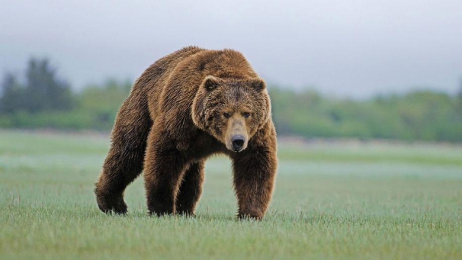 Двое друзей столкнулись с медведем, но их реакция на него довольно дикая!