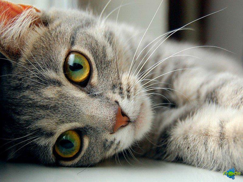 История про ленивую дочь и кота — стоит вашего внимания!