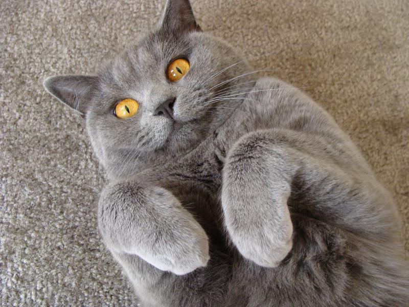 Кот наконец показал хозяину, что не тупой! :)